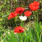 открытие садового сезона
