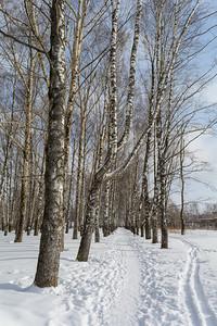 Март в парке