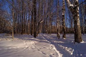 Зима в гороском парке